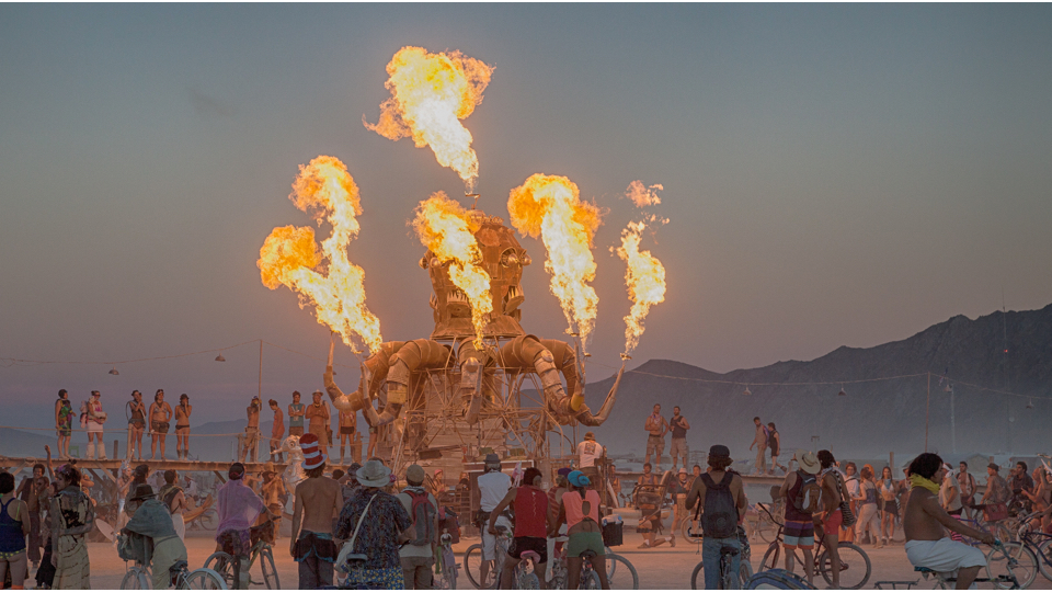 http://www.businessinsider.com/burning-man-bugs-2015-8
