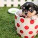 ペットと暮らそう!3万円台から借りられるペット可シェアハウス